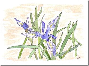 Blue Trillium Sunriver
